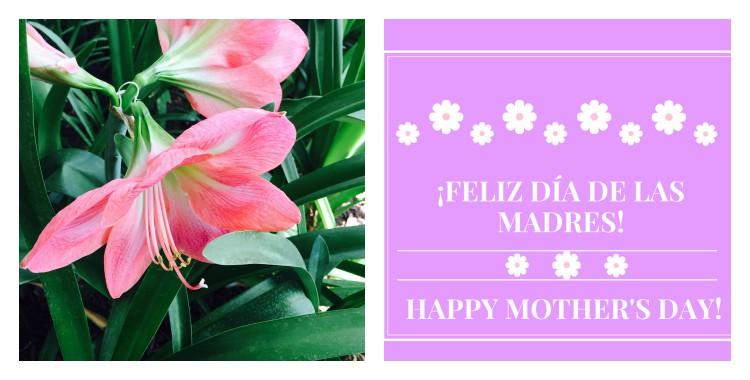 Feliz dia de las madres and Happy Mother's Day