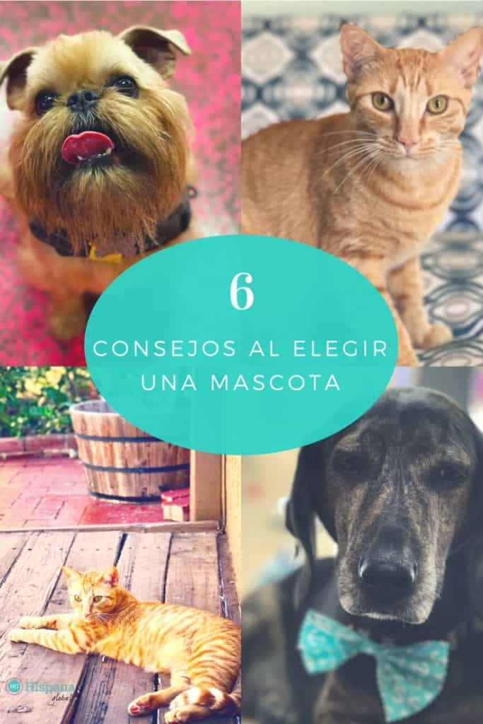 6 consejos antes de elegir una mascota VIA HISPANAGLOBAL.COM